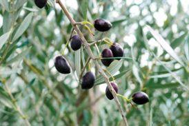Μισή λόγω…χαλαζιού αναμένεται η νέα σοδειά της Καλαμών στην Αιτωλοακαρνανία