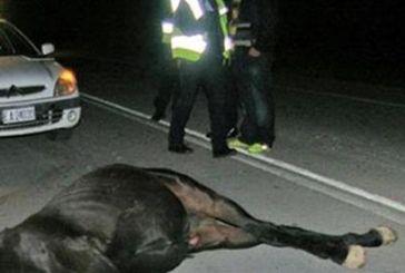 Βόνιτσα: Φορτηγό τράκαρε με άλογο