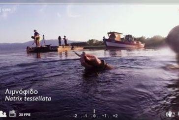 Η «άγρια» Τριχωνίδα στην ΕΡΤ 3 (βίντεο)