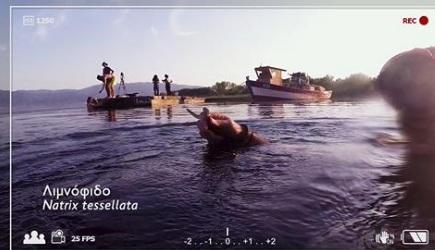 """Η """"άγρια"""" Τριχωνίδα στην ΕΡΤ 3 (βίντεο)"""