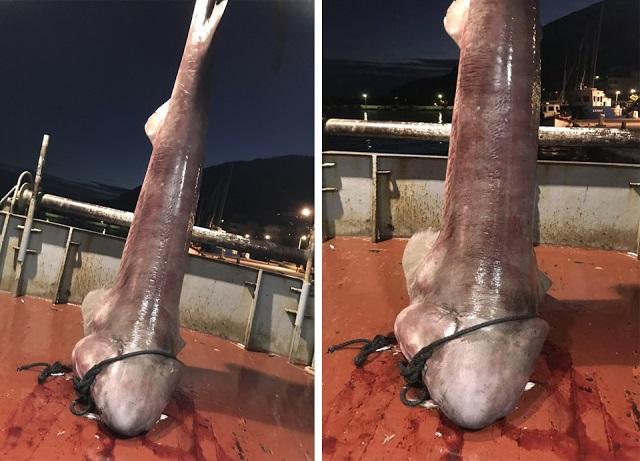 Πιάστηκε καρχαρίας «σαπουνάς» στον Αστακό (φωτό)
