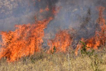 Κινητοποίηση της πυροσβεστικής για φωτιά στην Κυπάρισσο