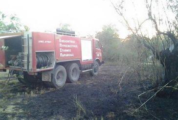 Πυρκαγιά σε ελαιώνα στην περιοχή της Ερμίτσας