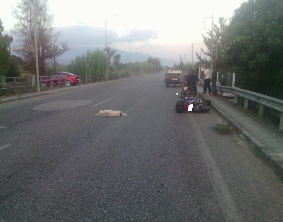 Tραυματισμός δικυκλιστή στον Πλάτανο Καλυβίων-πετάχτηκε σκύλος μπροστά του