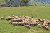 Δεύτερη πρόσκληση από το Υπ. Α.Α.Τ. για τη βιολογική κτηνοτροφία