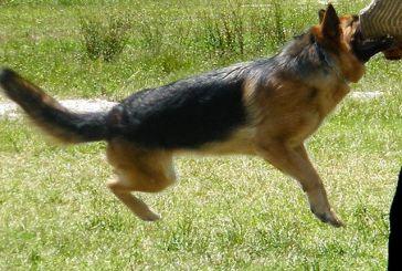 Σκύλος δάγκωσε 16χρονη στην Αβόρανη