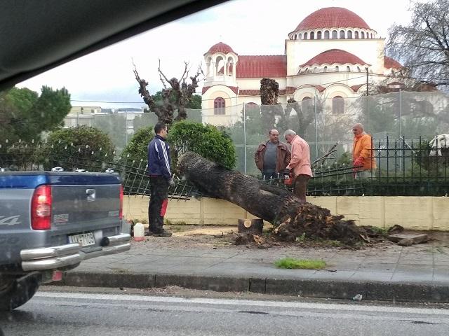 Πτώση δένδρου και ζημιές στην περίφραξη του  Ιερού Ναού Αγίου Δημητρίου στο Αγρίνιο