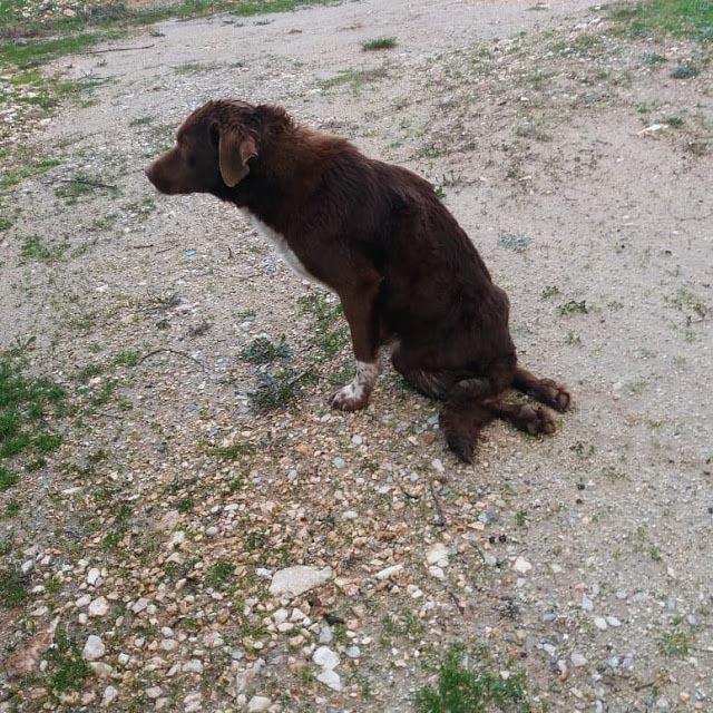 Κινητοποίηση για την σωτηρία τραυματισμένου σκύλου στον Αστακό