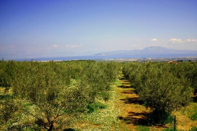 Τελειώνουν οι καλλιέργειες στην Αιτωλοακαρνανία χωρίς νερό, αγωγές από τους αγρότες