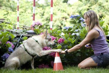 Κτηνίατροι: Μην απολυμαίνετε τους σκύλους και τις γάτες με χλωρίνη και υδροαλκοολικά τζελ