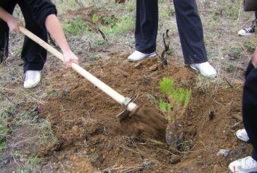 ΚΕΠΑ: Πρόσκληση για χορηγίες με σκοπό τη φύτευση δέντρων