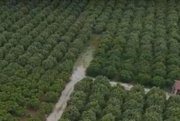 Η δύσβατη περιοχή των ερευνών για την εξαφάνιση του Ναυπάκτιου Θάνου Ακρίβου (video)