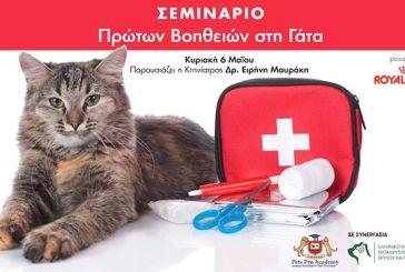 Πρώτη ημερίδα πρώτων βοηθειών για γάτες στις 6 Μαΐου