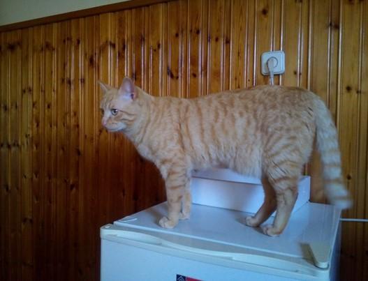 kanellos-gatos