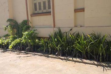 «Let's Do It Greece»: 1.800 φυτά θα διανεμηθούν σε σχολεία και συλλόγους του δήμου Αγρινίου