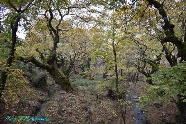 Φθινοπωρινό τοπίο, όπως διακρίνεται από το πέτρινο γεφύρι των Πηγών Μυρτιάς
