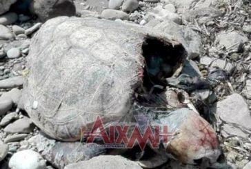 Ξεβράστηκε νεκρή θαλάσσια χελώνα στην Τουρλίδα