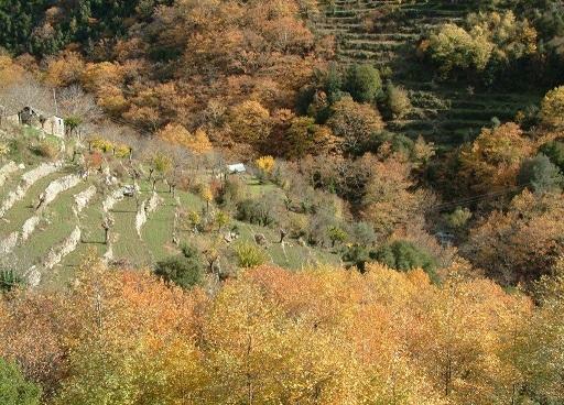 Φθινοπωρινή εικόνα από τον συνοικισμό Συκιές στην Κοιλάδα των Νεράιδων