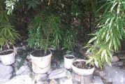 Δενδρύλλια χασίς, ναρκωτικά χάπια και λαθραίος καπνός βρέθηκαν σε αποθήκη του Αστακού-Δύο συλλήψεις