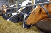 Εμβολιασμός βοοειδών για την αποφυγή οζώδους δερματίτιδας
