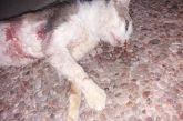 Θέρμο: χειροπέδες σε ηλικιωμένο για φόλες σε γάτες