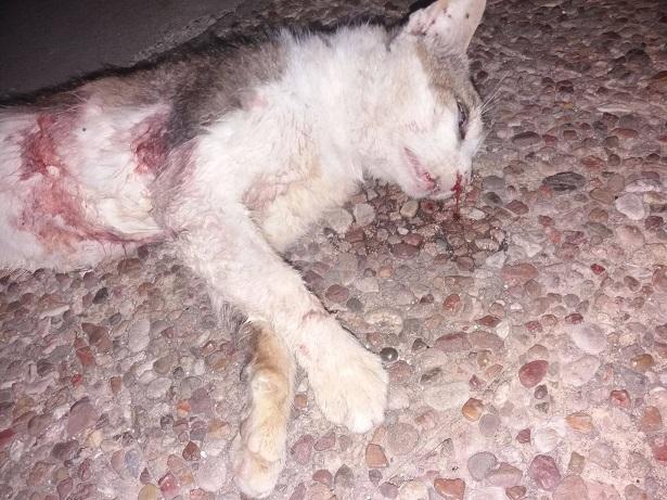 Δικογραφία για δηλητηρίαση γάτας στη Βόνιτσα