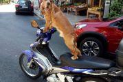Έτοιμος να φύγει με το μηχανάκι ο σκυλάκος στα Καραπανέικα