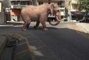 Aγρίνιο: Ελέφαντας στην πλατεία Χατζοπούλου!