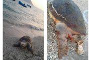 Νεκρή θαλάσσια χελώνα στον Μύτικα
