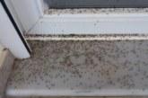 "«Aπό τα κουνούπια δεν μπορούμε να ανοίξουμε πόρτες και παράθυρα"" λένε Αιτωλικιώτες-πρωτοφανείς εικόνες"