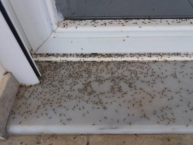 """Aπό τα κουνούπια δεν μπορούμε να ανοίξουμε πόρτες και παράθυρα"" λένε Αιτωλικιώτες-πρωτοφανείς εικόνες"