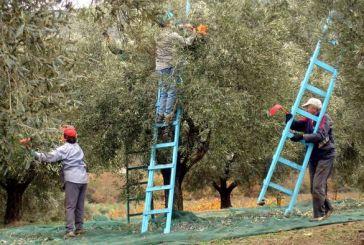 Έρευνα: Μια προσέγγιση των απόψεων για τους μετανάστες στην περιοχή του Αγρινίου