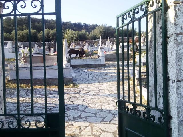 Άλογα βόσκουν στο νεκροταφείο του Προδρόμου Ξηρομέρου