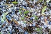 Νέα χαλαζόπτωση σε Χρυσοβέργι και «Μαγούλες» – Ολοκληρωτική καταστροφή της ελαιοπαραγωγής