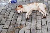 Βόνιτσα : Δικογραφία για νέα φόλα σε σκύλο