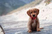 Πράσινο Κίνημα: Η παγκόσμια ημέρα σκύλου μας θυμίζει το ελλειμματικό θεσμικό πλαίσιο