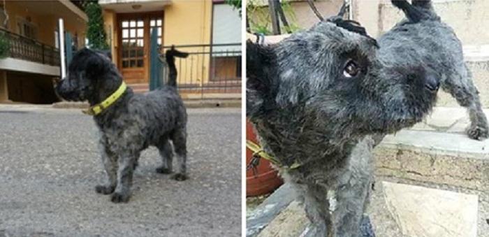 Χάθηκε σκυλάκι στην Καμαρούλα