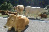 Απογραφή ζωικού κεφαλαίου βοοειδών Π.Ε Αιτωλοακαρνανίας