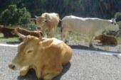 Έρχονται πρόστιμα για τα ανεπιτήρητα ζώα