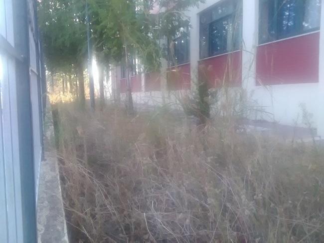 Aγρίνιο: Σχολεία πνιγμένα στα χόρτα στο ξεκίνημα της χρονιάς