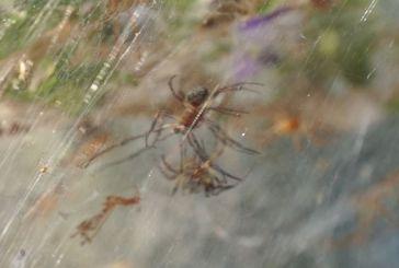 Πάρτι με σεξ κάνουν οι αράχνες στο Αιτωλικό! Τουλάχιστον κάποιος διασκεδάζει στην περιοχή…