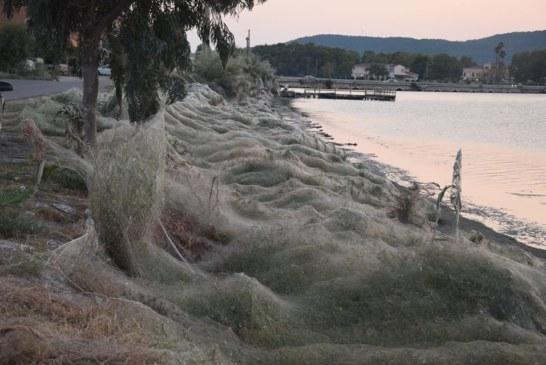 Πέπλο αράχνης «κατάπιε» 300 μέτρα βλάστησης στο Αιτωλικό (βίντεο-φωτό)