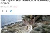 Το γιγάντιο πέπλο αράχνης του Αιτωλικού έγινε θέμα στο BBC!