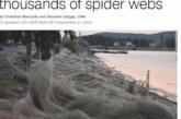 Στα «πέρατα του κόσμου» οι αράχνες του Αιτωλικού