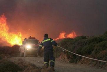 ΕΛΓΑ: Μέτρα ενίσχυσης για ζημία από τις πυρκαγιές του '17- 924 στρέμματα στα Παρακαμπύλια