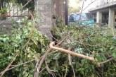 Καθάρισε τον κήπο, έβγαλε… ζούγκλα στο πεζοδρόμιο αλλά δεν ειδοποίησε τον δήμο
