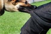 Ναύπακτος :Αδέσποτα σκυλιά δάγκωσαν γυναίκα στην παραλία Παλαιοπαναγιάς