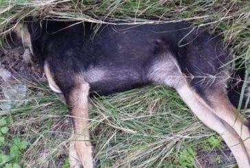 Θανάτωση σκύλου με δηλητηριασμένη τροφή στο Διασελλάκι Θέρμου