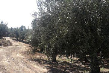 Εργασίες αγροτικής οδοποιίας σε κοινότητες του δήμου  Μεσολογγίου