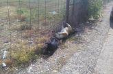 Ακόμα μεγαλύτερη ντροπή και ξεφτίλα: τα νεκρά σκυλιά τα πέταξαν έξω από το ΔΑΚ! (φωτο)